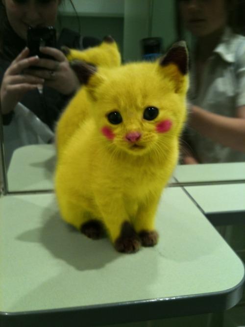 Pikachu Kitty Neatorama