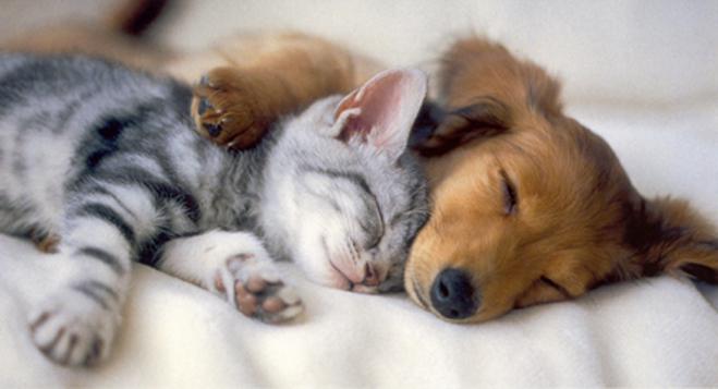 http://www.neatorama.com/wp-content/uploads/2011/02/RCP101-Kitten-Puppy.jpg