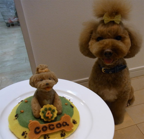 Birthday Cakes For Dogs Neatorama