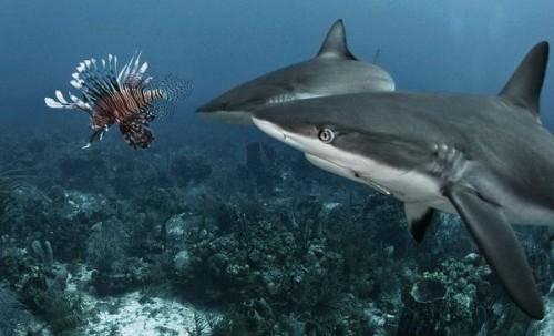 Training Sharks To Eat Neatorama