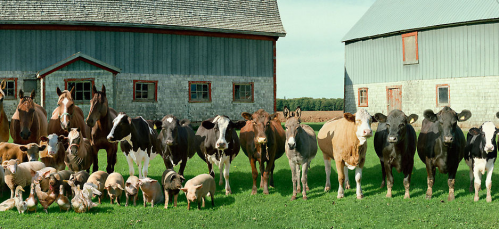 Real farm animals together - photo#29