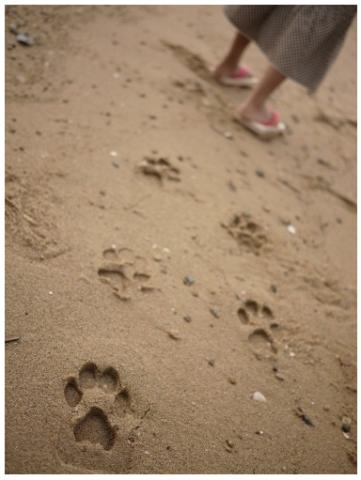 Animal Footprint Sandals Neatorama