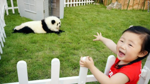 Chinese Craze Dyeing Pets To Look Like Other Wild Animals