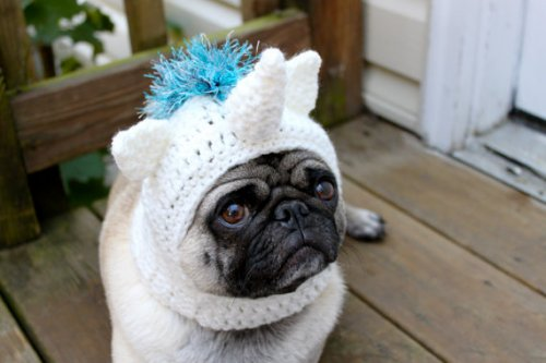 Magical Unicorn Pug Hat Neatorama