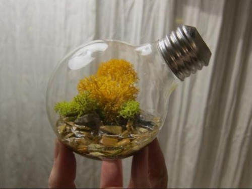 Planters Out Of Old Light Bulbs Neatorama