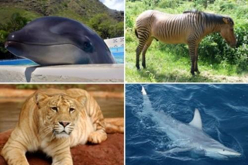 Cool Hybrid Animals Re...