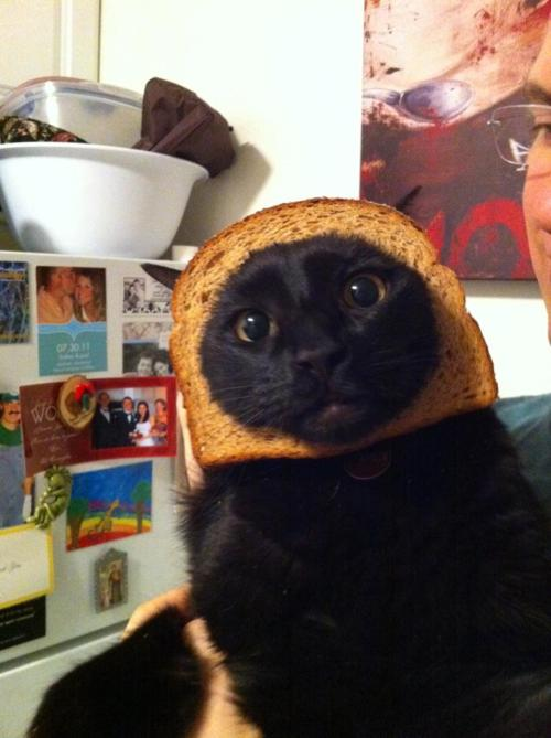 Cat Breading Neatorama