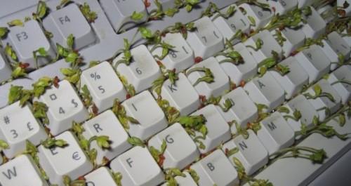 office desk pranks ideas. turn a keyboard into planter office desk pranks ideas