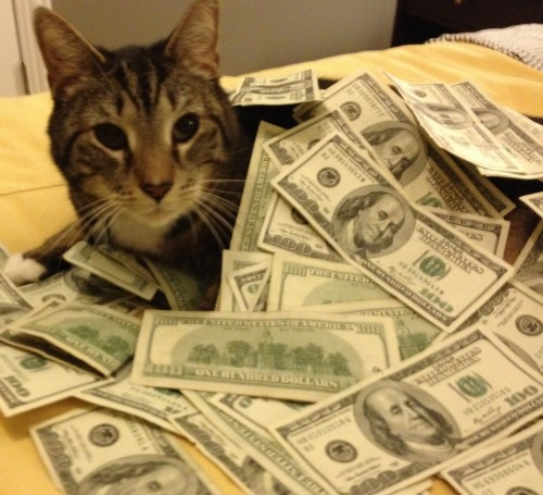 Cats Rolling in Money Cats Rolling Around in