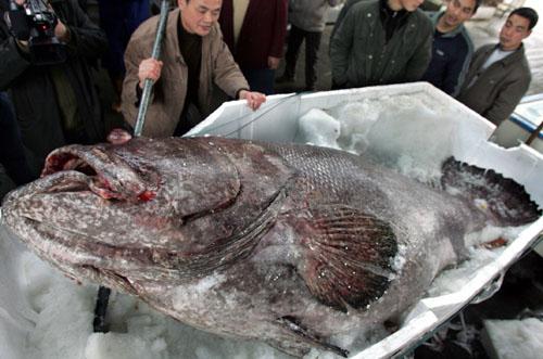 pez gigante